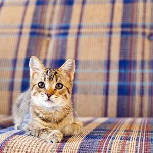 cat on tartan