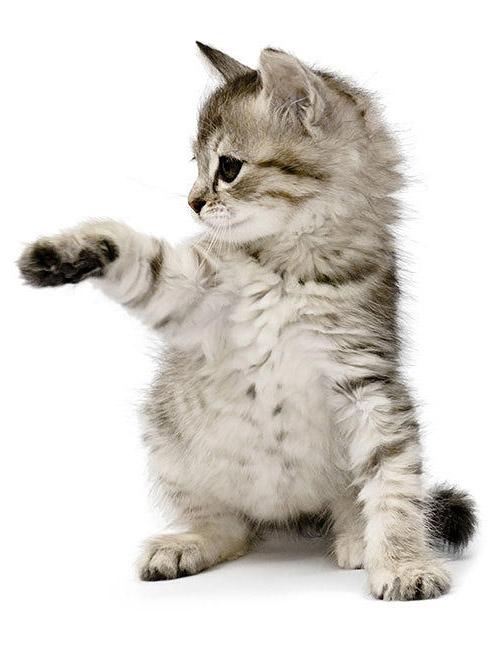 kitten in cattery
